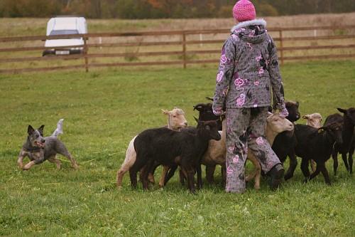 Artikkel Kuidas Greta lammaste karjatamist õppis 5