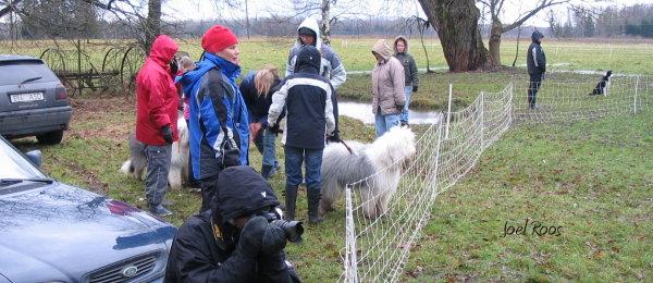 Artikkel karjatamiskoolitus karjakoertele 6
