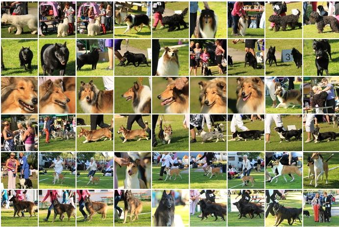 I rühma näitus 2014 fotod